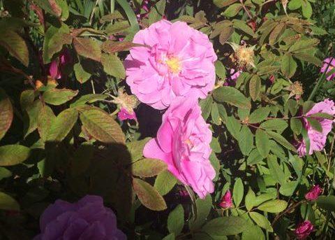 Garden in the Wild blog
